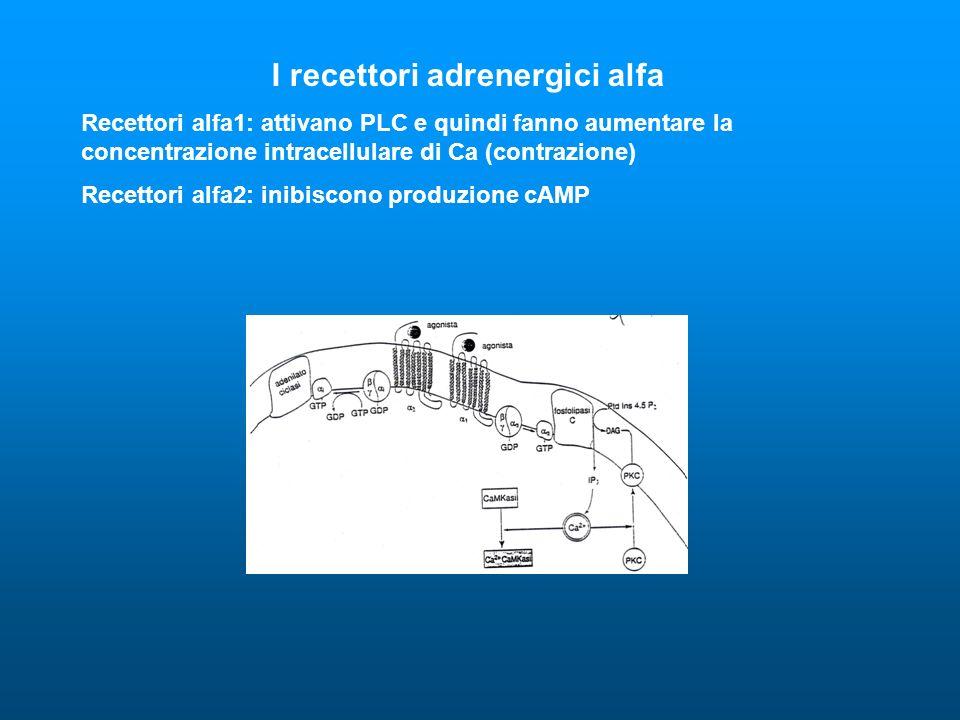 I recettori adrenergici alfa Recettori alfa1: attivano PLC e quindi fanno aumentare la concentrazione intracellulare di Ca (contrazione) Recettori alf
