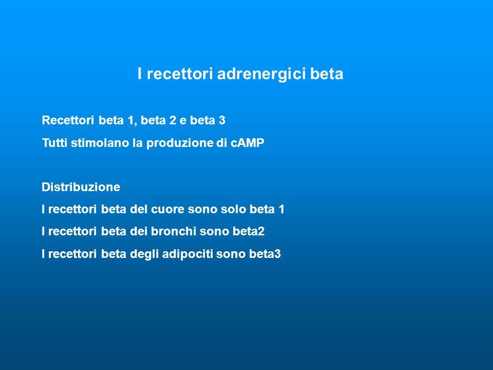 I recettori adrenergici beta Recettori beta 1, beta 2 e beta 3 Tutti stimolano la produzione di cAMP Distribuzione I recettori beta del cuore sono sol