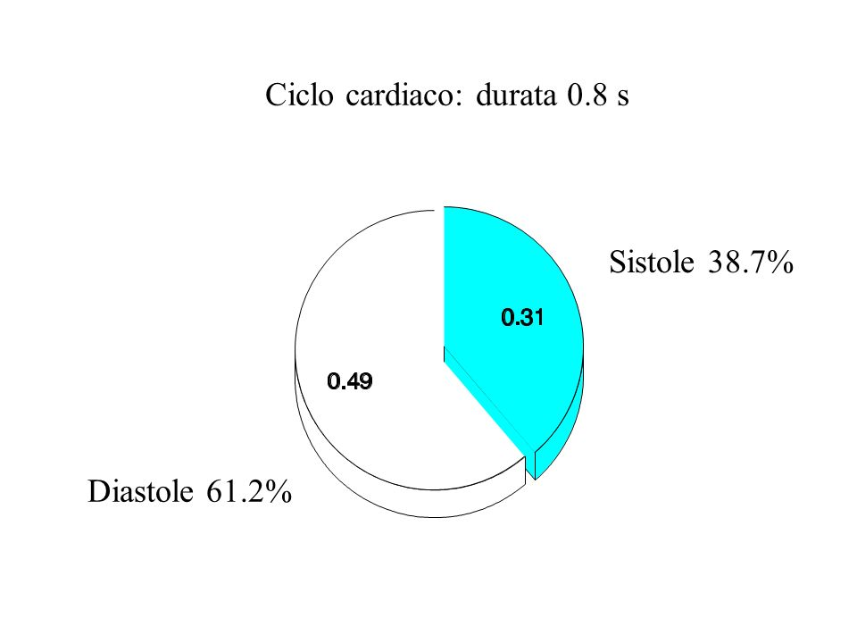 Sistole isometrica 8.3% Sistole atriale 13.8% Diastasi 23.8% Riempimento rapido 13.8% Diastole isometrica 10% Protodiastole 5% Efflusso lento 18.3% Efflusso rapido 11.3% Durata sistole 0.31 Durata diastole 0.49 Durata ciclo 0.80