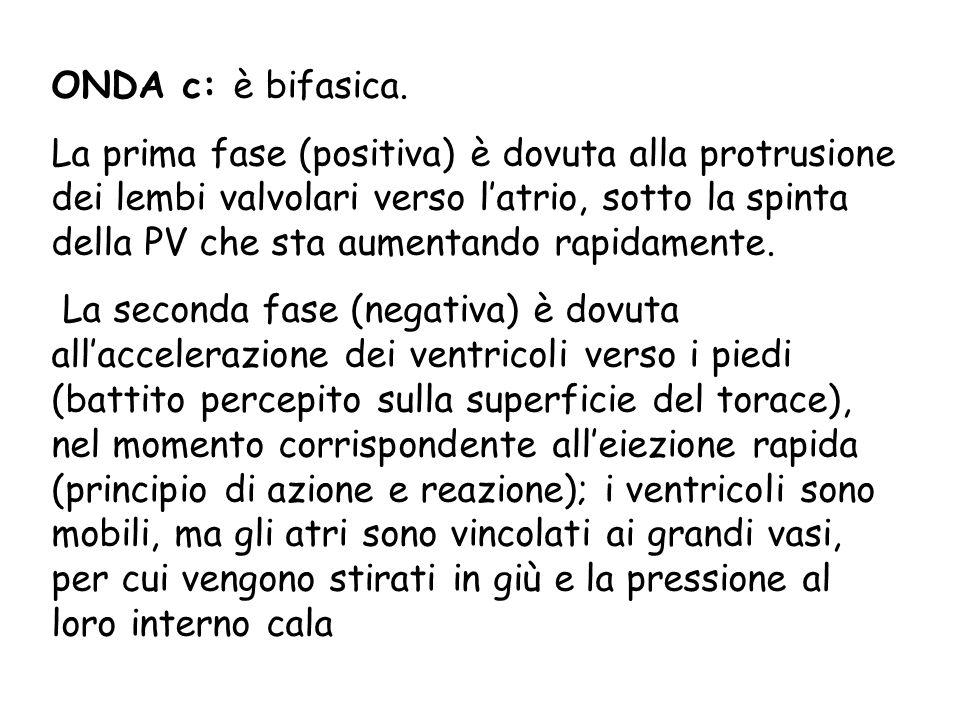 ONDA c: è bifasica. La prima fase (positiva) è dovuta alla protrusione dei lembi valvolari verso latrio, sotto la spinta della PV che sta aumentando r