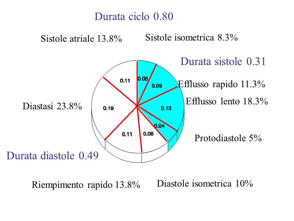 Sistole isometrica 8.3% Sistole atriale 13.8% Diastasi 23.8% Riempimento rapido 13.8% Diastole isometrica 10% Protodiastole 5% Efflusso lento 18.3% Ef