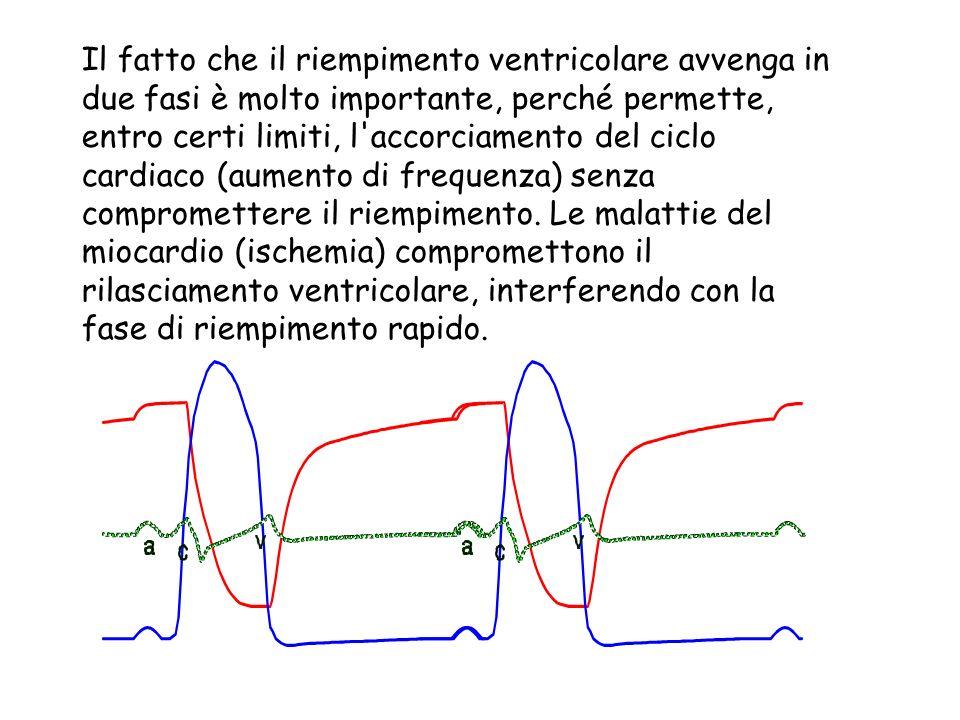 Il fatto che il riempimento ventricolare avvenga in due fasi è molto importante, perché permette, entro certi limiti, l'accorciamento del ciclo cardia