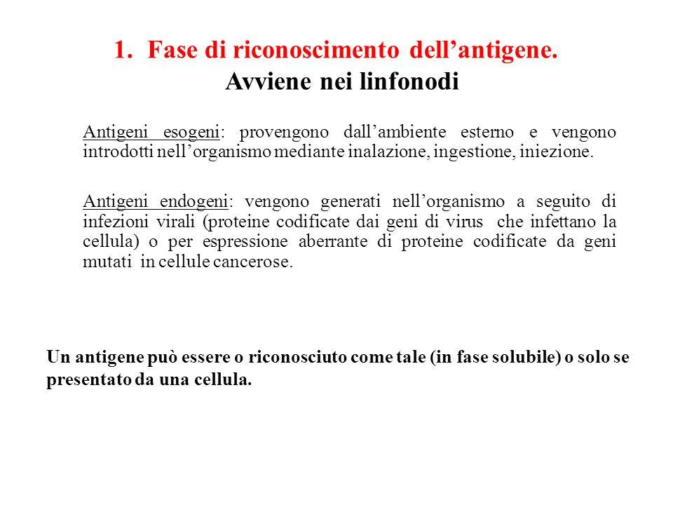 Antigeni esogeni: provengono dallambiente esterno e vengono introdotti nellorganismo mediante inalazione, ingestione, iniezione. Antigeni endogeni: ve