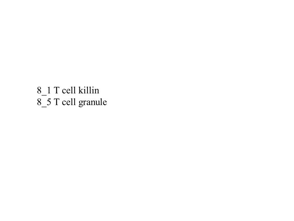 8_1 T cell killin 8_5 T cell granule