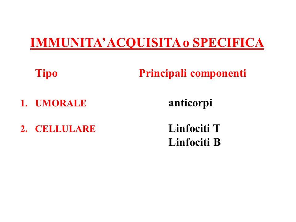 IMMUNITA ACQUISITA o SPECIFICA Tipo Principali componenti 1.UMORALE anticorpi 2.CELLULARE Linfociti T Linfociti B