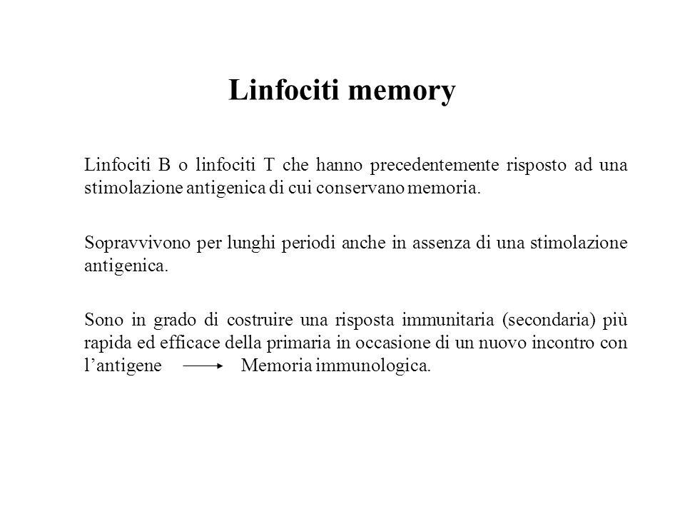Linfociti memory Linfociti B o linfociti T che hanno precedentemente risposto ad una stimolazione antigenica di cui conservano memoria. Sopravvivono p