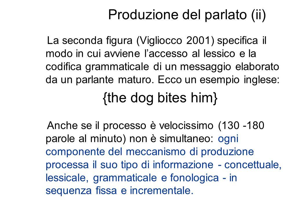 Produzione del parlato (ii) La seconda figura (Vigliocco 2001) specifica il modo in cui avviene laccesso al lessico e la codifica grammaticale di un m