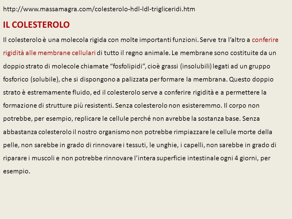 http://www.massamagra.com/colesterolo-hdl-ldl-trigliceridi.htm IL COLESTEROLO Il colesterolo è una molecola rigida con molte importanti funzioni.