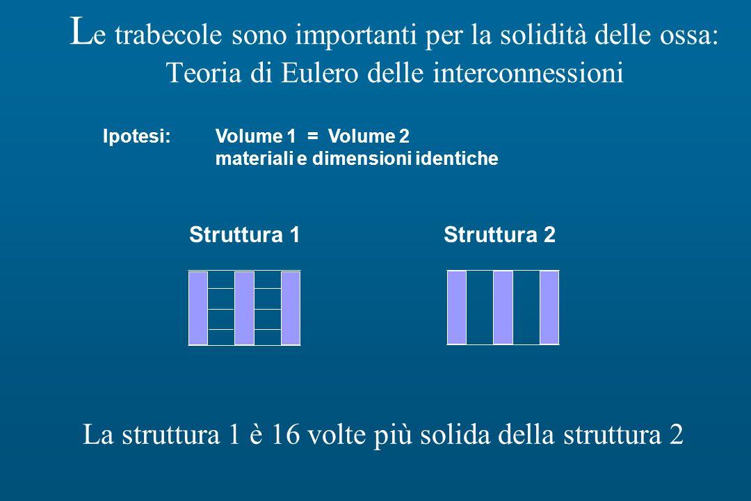 L e trabecole sono importanti per la solidità delle ossa: Teoria di Eulero delle interconnessioni La struttura 1 è 16 volte più solida della struttura 2 Ipotesi:Volume 1 = Volume 2 materiali e dimensioni identiche Struttura 1Struttura 2