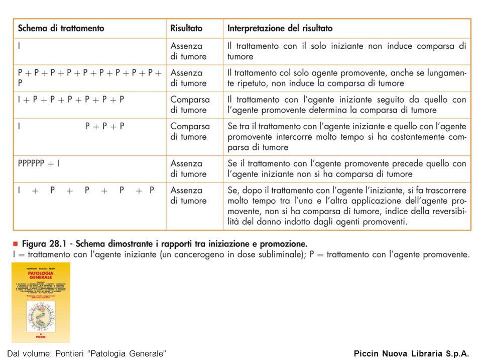 Figura 28.1 - Schema dimostrante i rapporti tra iniziazione e promozione. Dal volume: Pontieri Patologia GeneralePiccin Nuova Libraria S.p.A.