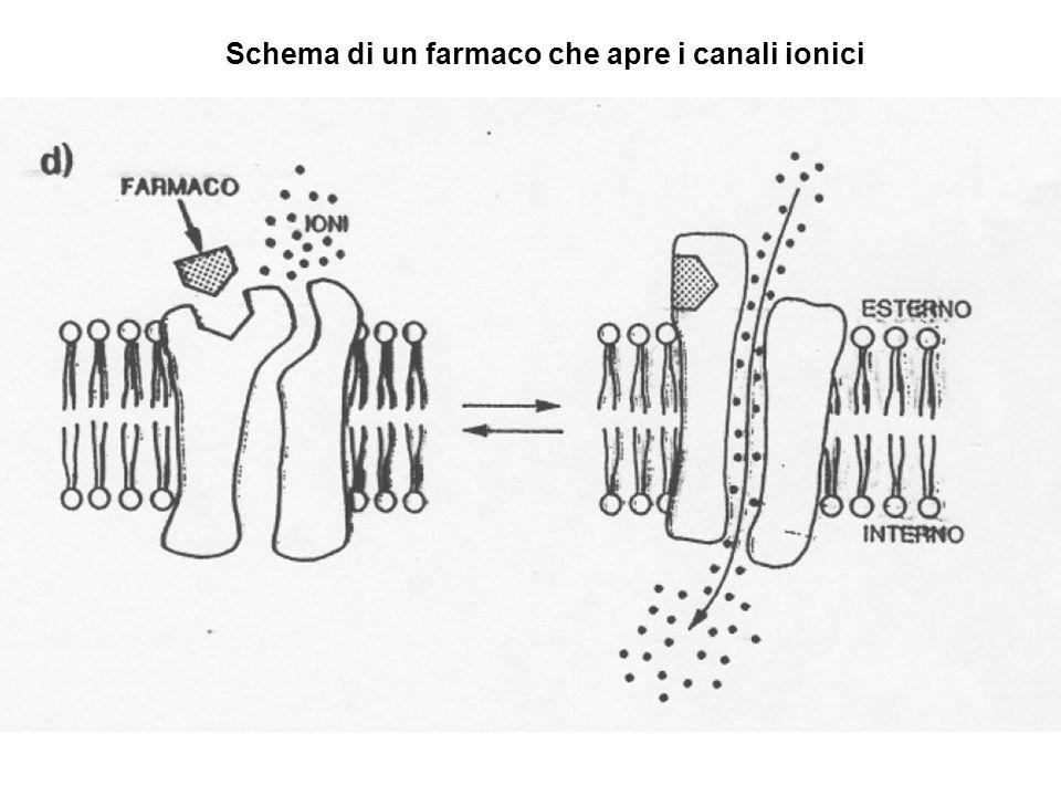 Schema di un farmaco che apre i canali ionici