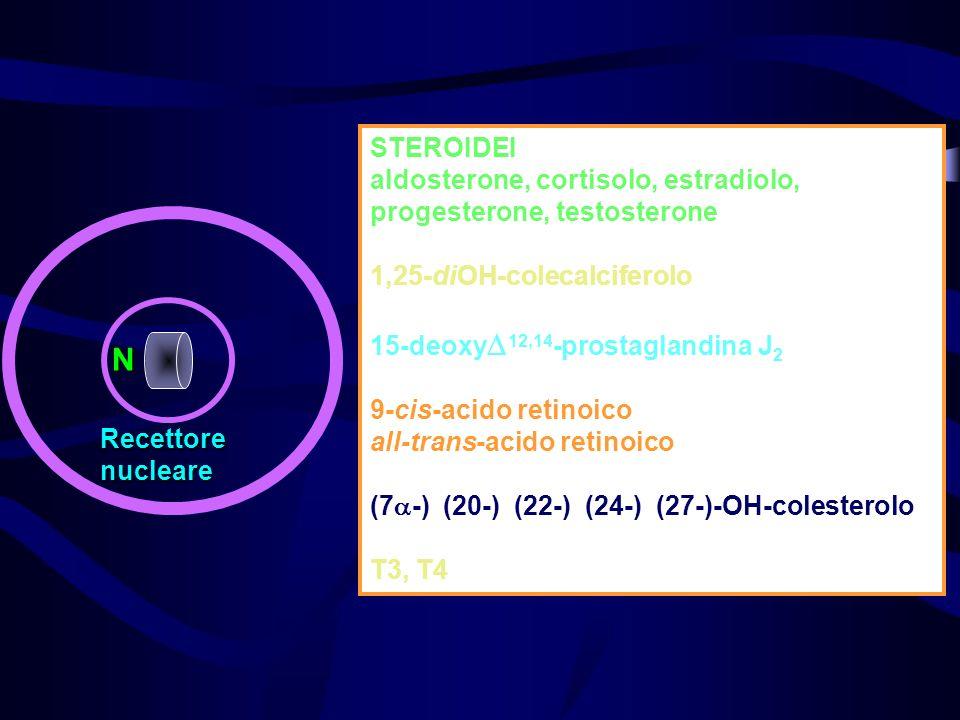 N Recettorenucleare STEROIDEI aldosterone, cortisolo, estradiolo, progesterone, testosterone 1,25-diOH-colecalciferolo 15-deoxy 12,14 -prostaglandina