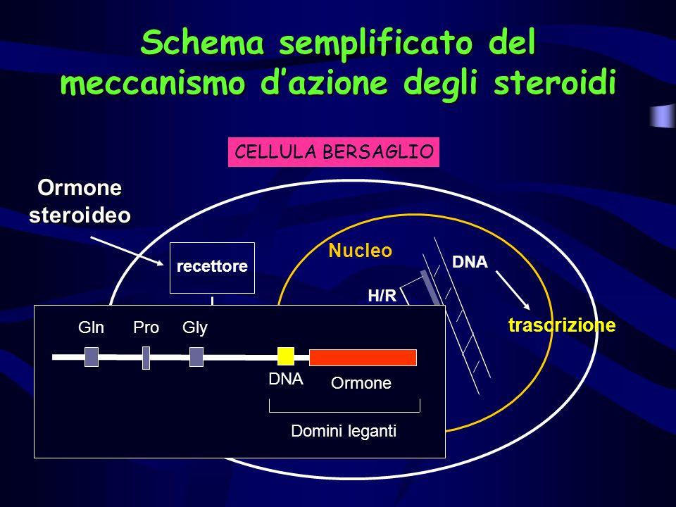 Schema semplificato del meccanismo dazione degli steroidi Ormone steroideo Complesso ormone recettore recettore H/R DNA trascrizione Nucleo CELLULA BE