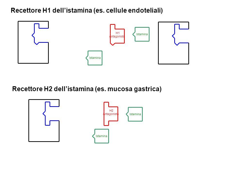 H1 Antagonista Recettore H1 dellistamina (es. cellule endoteliali) Recettore H2 dellistamina (es. mucosa gastrica) Istamina H2 Antagonista Istamina H2
