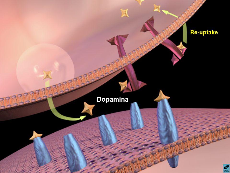 Dopamina Re-uptake