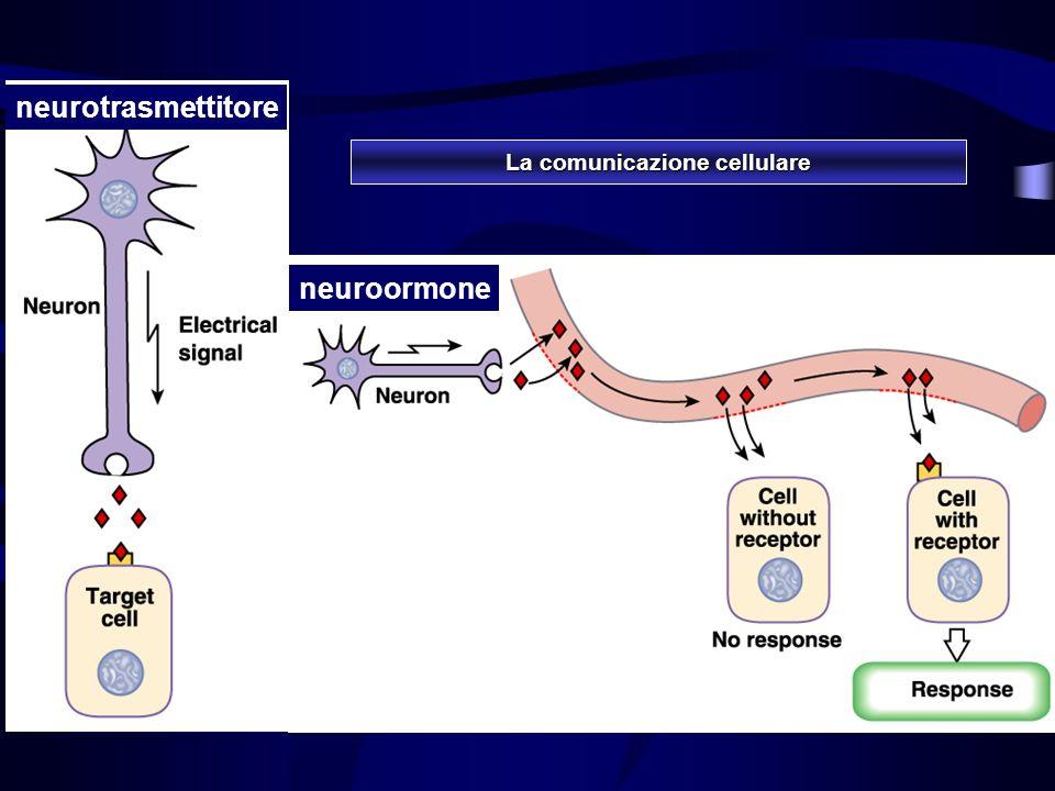 neuroormone neurotrasmettitore La comunicazione cellulare