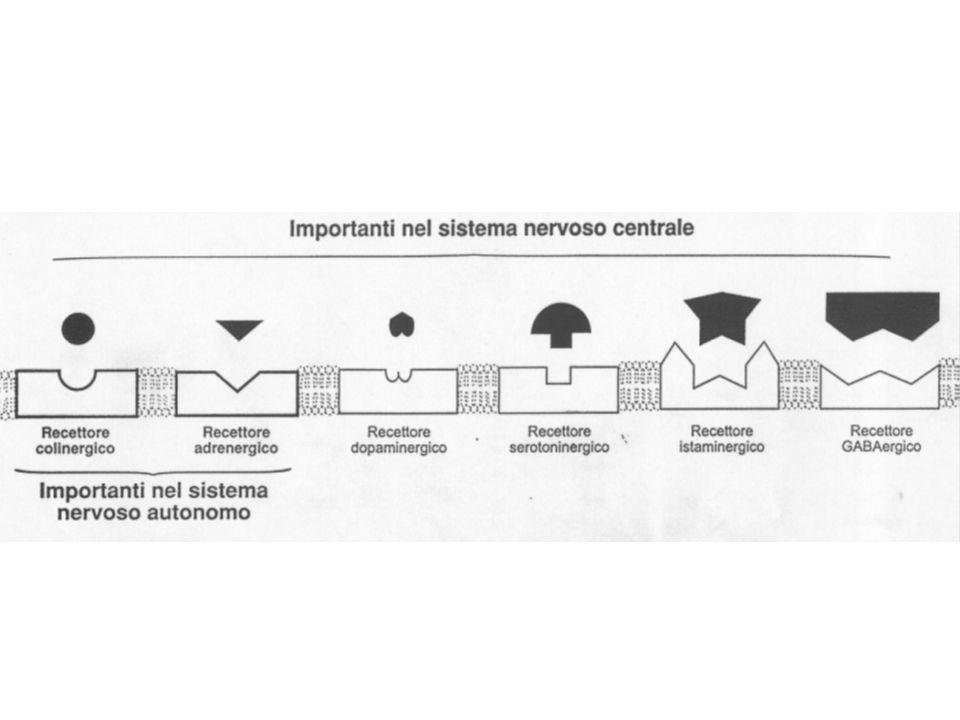 Le due isoforme dellenzima ciclo-ossigenasi che legano lacido arachidonico Due farmaci anti-infiammatori (naprossene e celecoxib) che inibiscono lenzima Acido arachidonico Esempio di enzimi bersaglio di farmaci