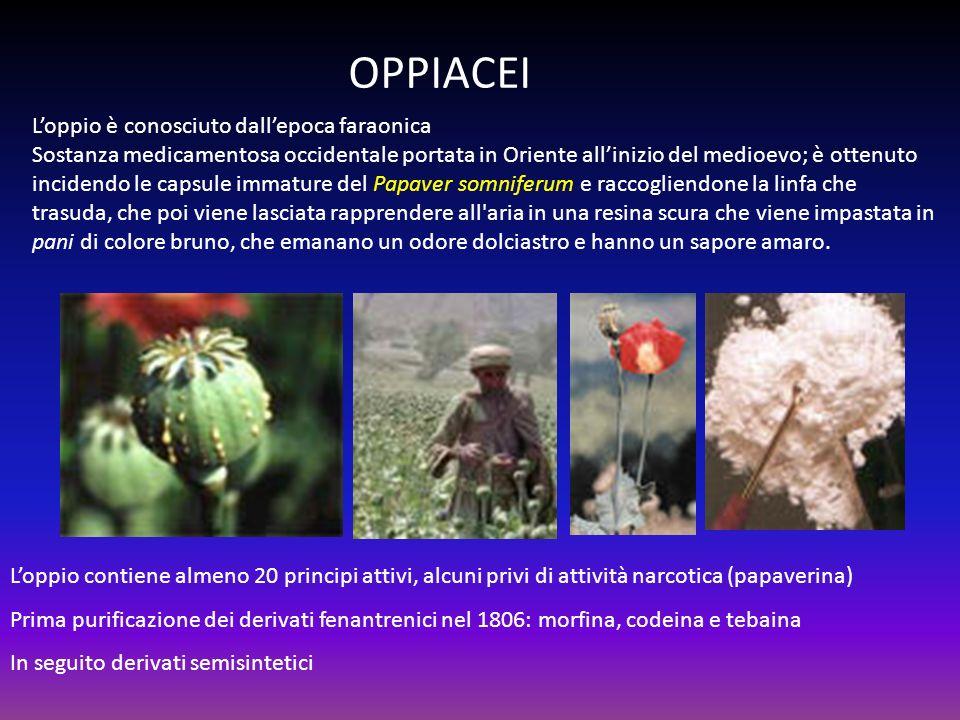 OPPIACEI Loppio è conosciuto dallepoca faraonica Sostanza medicamentosa occidentale portata in Oriente allinizio del medioevo; è ottenuto incidendo le