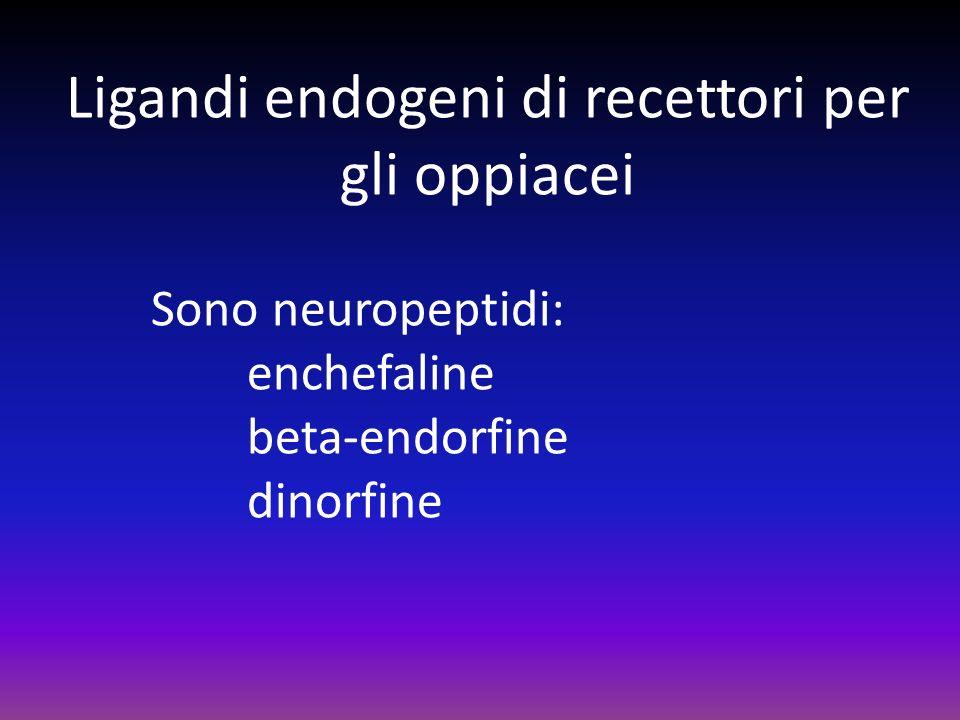 Ligandi endogeni di recettori per gli oppiacei Sono neuropeptidi: enchefaline beta-endorfine dinorfine