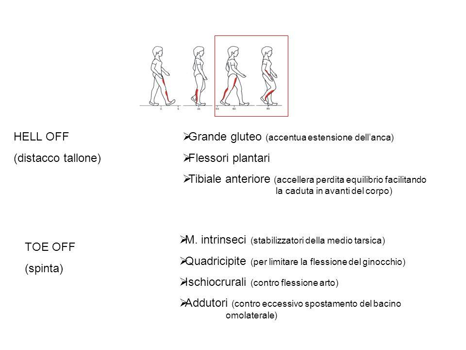 Grande gluteo (accentua estensione dellanca) Flessori plantari Tibiale anteriore (accellera perdita equilibrio facilitando la caduta in avanti del corpo) HELL OFF (distacco tallone) TOE OFF (spinta) M.