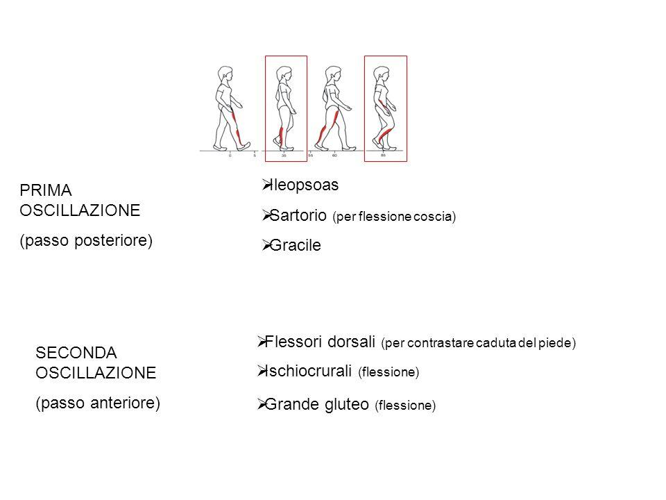Ileopsoas Sartorio (per flessione coscia) Gracile PRIMA OSCILLAZIONE (passo posteriore) SECONDA OSCILLAZIONE (passo anteriore) Flessori dorsali (per contrastare caduta del piede) Ischiocrurali (flessione) Grande gluteo (flessione)