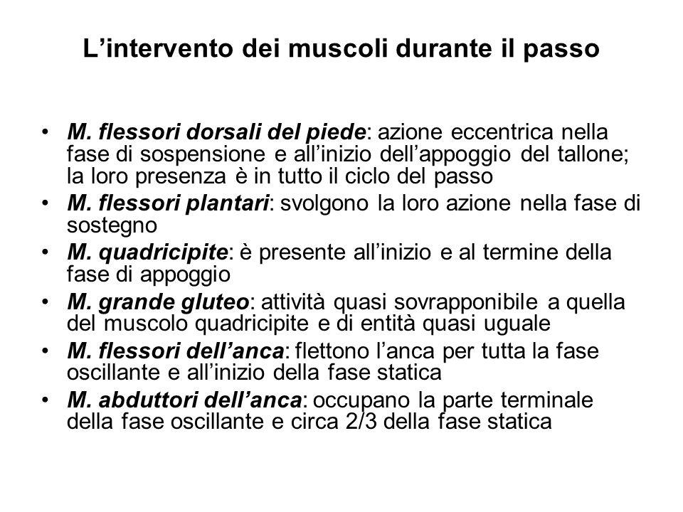 Lintervento dei muscoli durante il passo M.