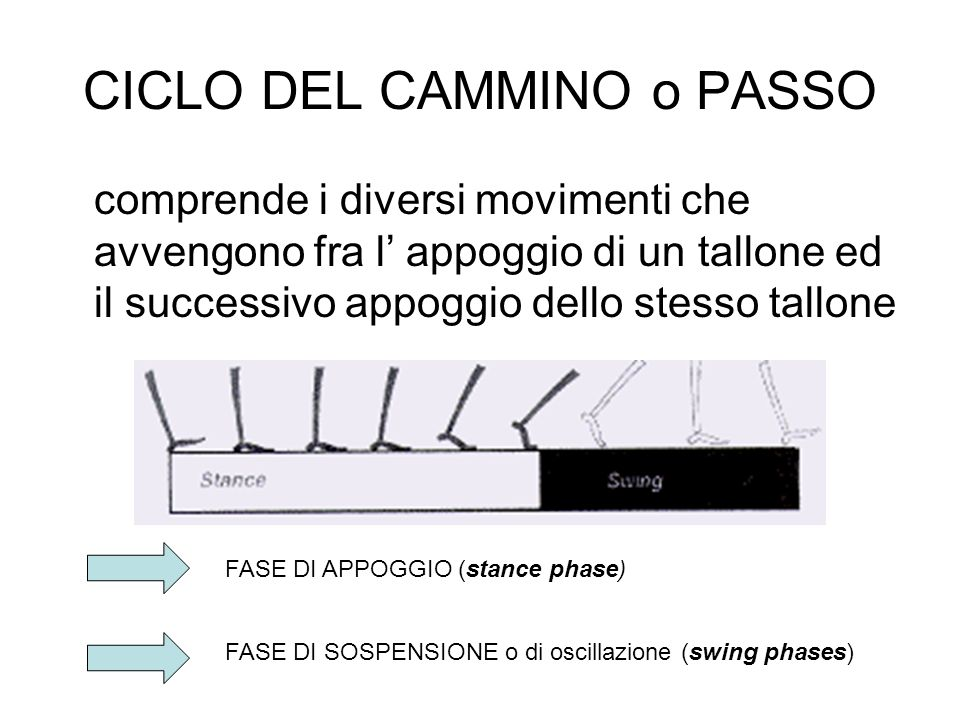CICLO DEL CAMMINO o PASSO comprende i diversi movimenti che avvengono fra l appoggio di un tallone ed il successivo appoggio dello stesso tallone FASE DI APPOGGIO (stance phase) FASE DI SOSPENSIONE o di oscillazione (swing phases)