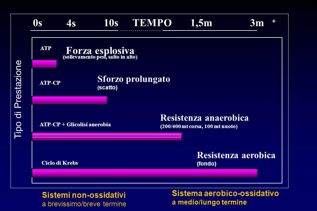 TEMPO0s 4s 10s1,5m3m ATP Forza esplosiva (sollevamento pesi, salto in alto) ATP-CP Sforzo prolungato ( scatto) ATP-CP + Glicolisi anerobia Resistenza