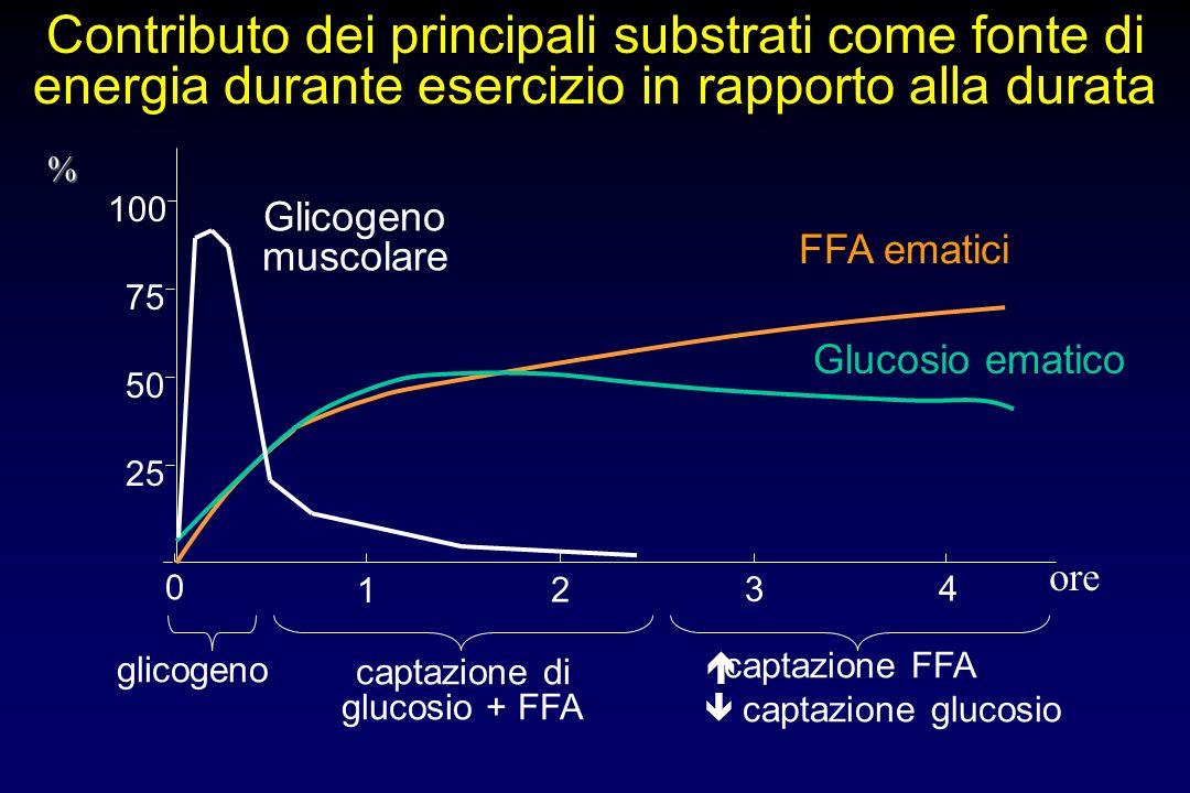 0 1 2 3 4 25 50 75 100 Glicogeno muscolare glicogeno FFA ematici captazione di glucosio + FFA Glucosio ematico captazione FFA captazione glucosio Cont
