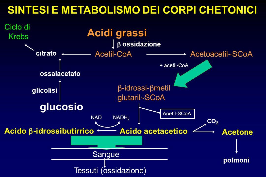 Acidi grassi Ciclo di Krebs citrato Acetil-CoA Acetoacetil SCoA glucosio ossalacetato -idrossi- metil glutaril SCoA Acido -idrossibutirrico Acido acet