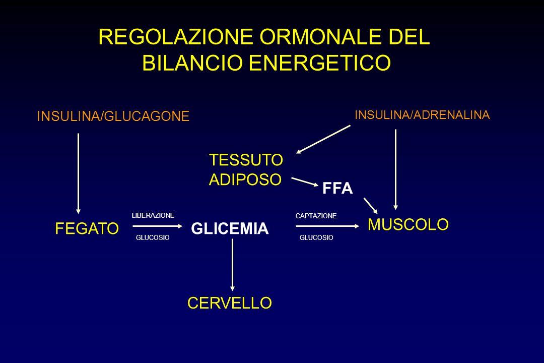 REGOLAZIONE ORMONALE DEL BILANCIO ENERGETICO FEGATO MUSCOLO TESSUTO ADIPOSO GLICEMIA LIBERAZIONE CAPTAZIONE CERVELLO INSULINA/GLUCAGONE INSULINA/ADREN
