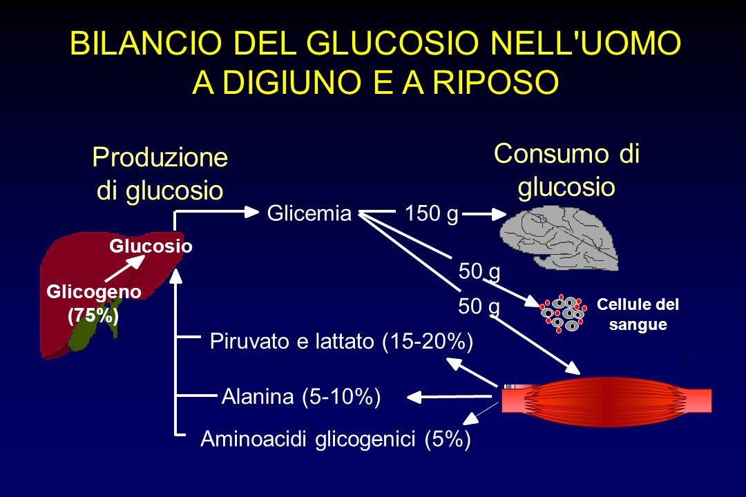 2 BILANCIO DEL GLUCOSIO NELL'UOMO A DIGIUNO E A RIPOSO Produzione di glucosio Consumo di glucosio Glicogeno (75%) Glucosio Glicemia Piruvato e lattato
