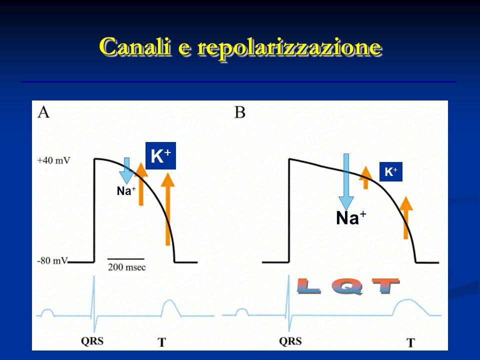 Canali e repolarizzazione Na + K+K+ K+K+
