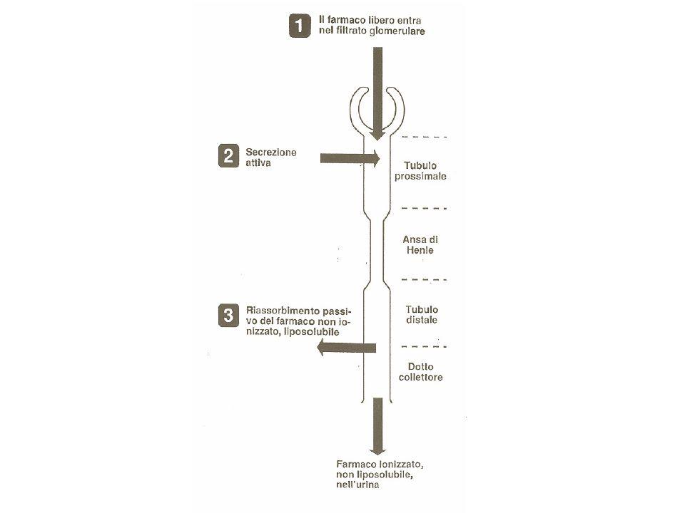La capacità di eliminazione (clearance) del rene varia con letà.