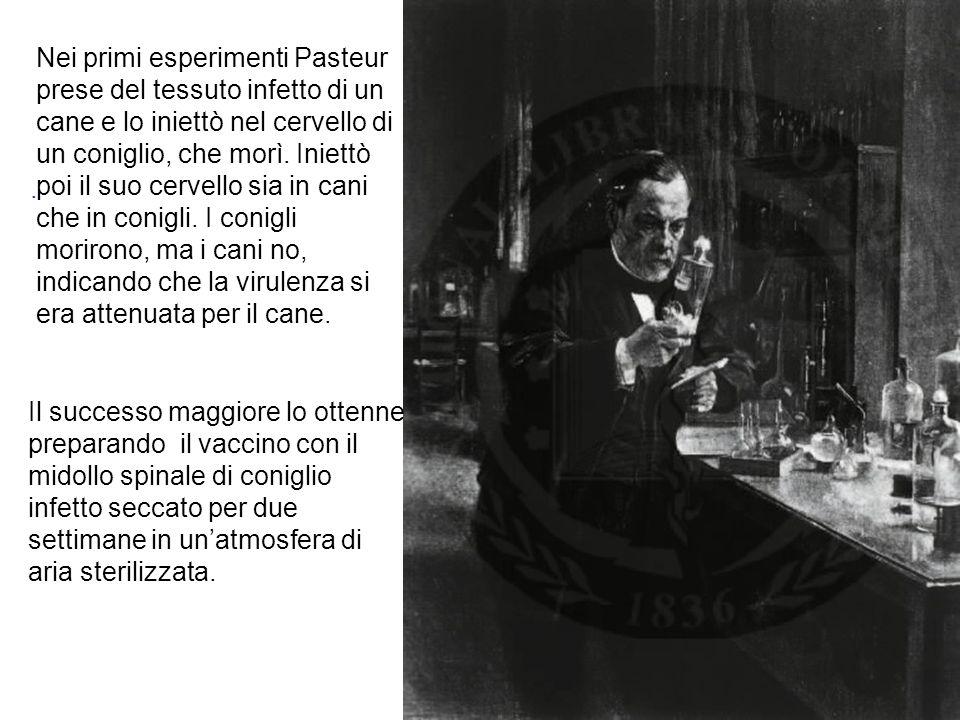 Nei primi esperimenti Pasteur prese del tessuto infetto di un cane e lo iniettò nel cervello di un coniglio, che morì.