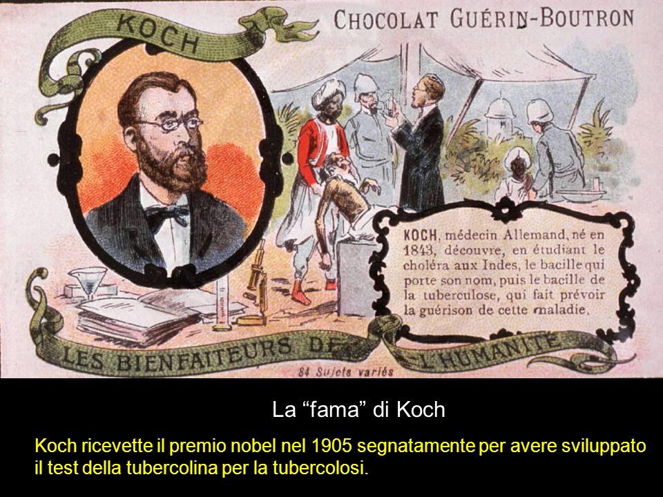 La fama di Koch Koch ricevette il premio nobel nel 1905 segnatamente per avere sviluppato il test della tubercolina per la tubercolosi.
