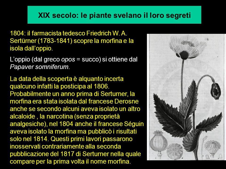 XIX secolo: le piante svelano il loro segreti 1804: il farmacista tedesco Friedrich W.