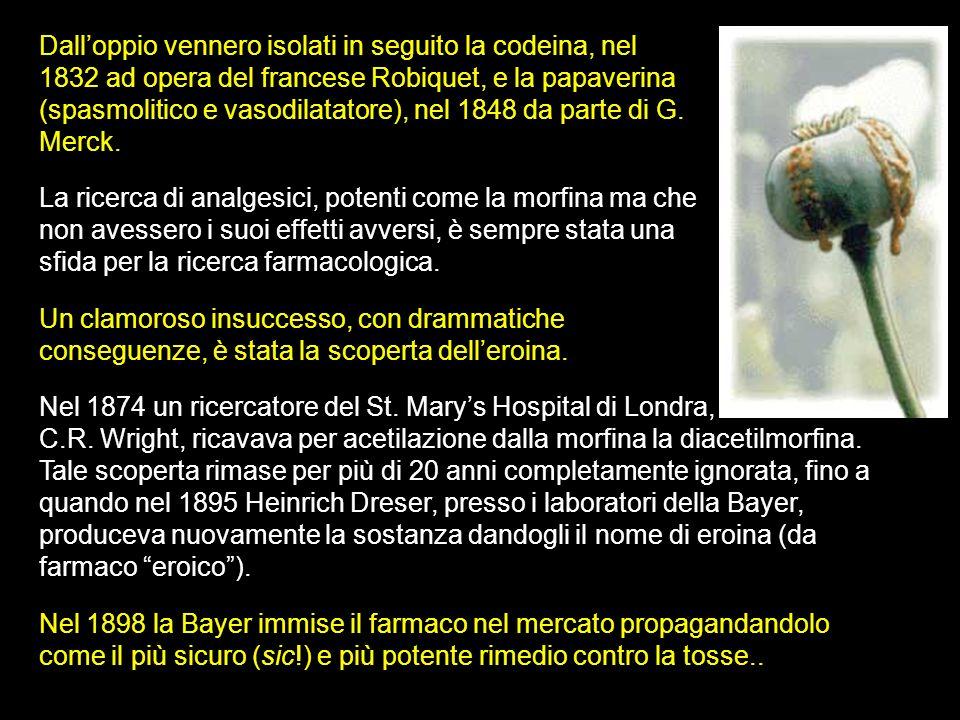Dalloppio vennero isolati in seguito la codeina, nel 1832 ad opera del francese Robiquet, e la papaverina (spasmolitico e vasodilatatore), nel 1848 da parte di G.
