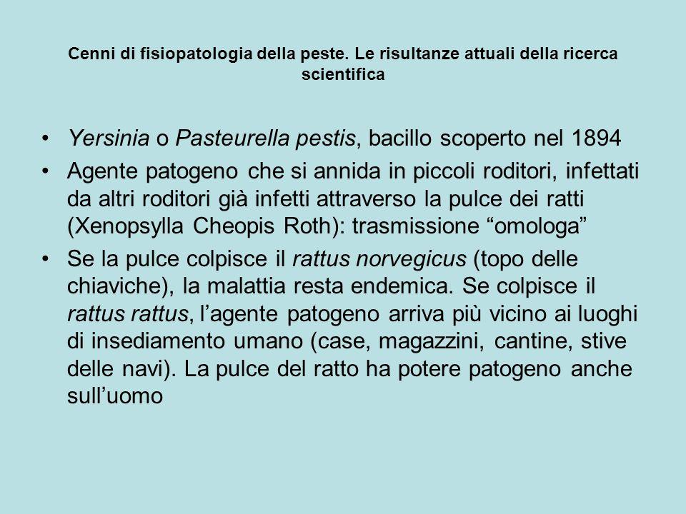 Cenni di fisiopatologia della peste. Le risultanze attuali della ricerca scientifica Yersinia o Pasteurella pestis, bacillo scoperto nel 1894 Agente p
