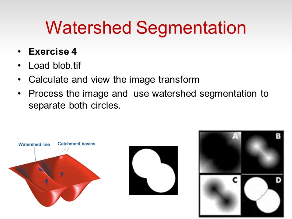 Watershed Segmentation Exercise 4 Load blob.tif Calculate and view the image transform Process the image and use watershed segmentation to separate both circles.