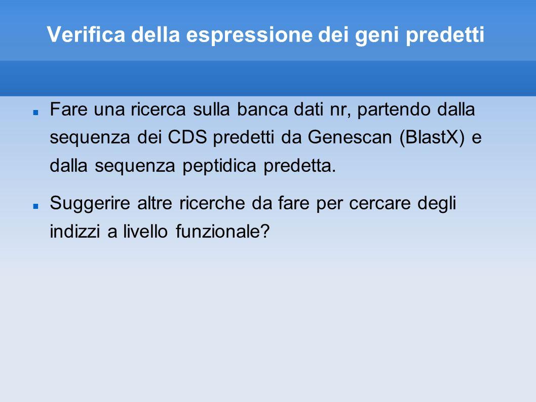 Verifica della espressione dei geni predetti Fare una ricerca sulla banca dati nr, partendo dalla sequenza dei CDS predetti da Genescan (BlastX) e dalla sequenza peptidica predetta.