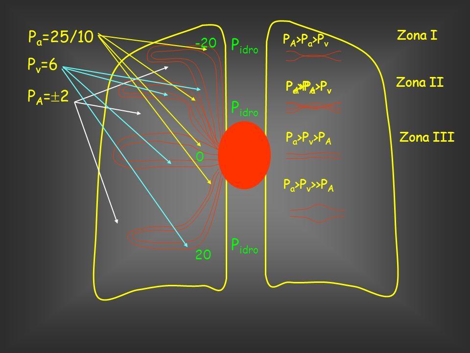 P a =25/10 P v =6 P A = 2 P idro -20 P idro 0 20 P A >P a >P v P a >P A >P v P a >P v >P A P a >P v >>P A Zona I Zona II Zona III P A >P a >P v