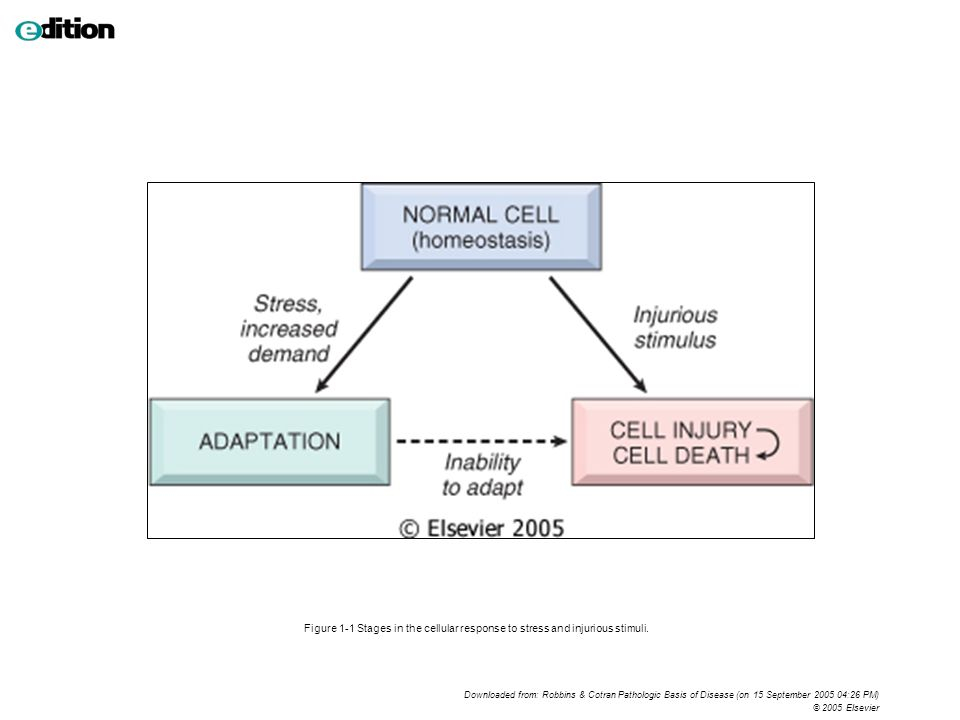 Figure 1-1 Stages in the cellular response to stress and injurious stimuli. Downloaded from: Robbins & Cotran Pathologic Basis of Disease (on 15 Septe
