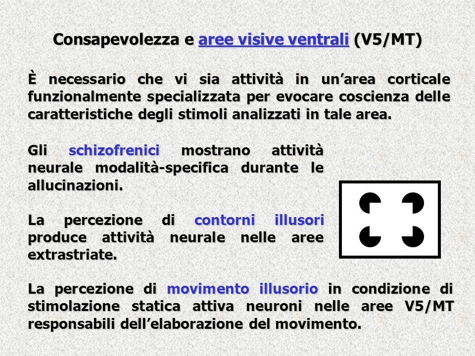 Consapevolezza e aree visive ventrali (V5/MT) È necessario che vi sia attività in unarea corticale funzionalmente specializzata per evocare coscienza