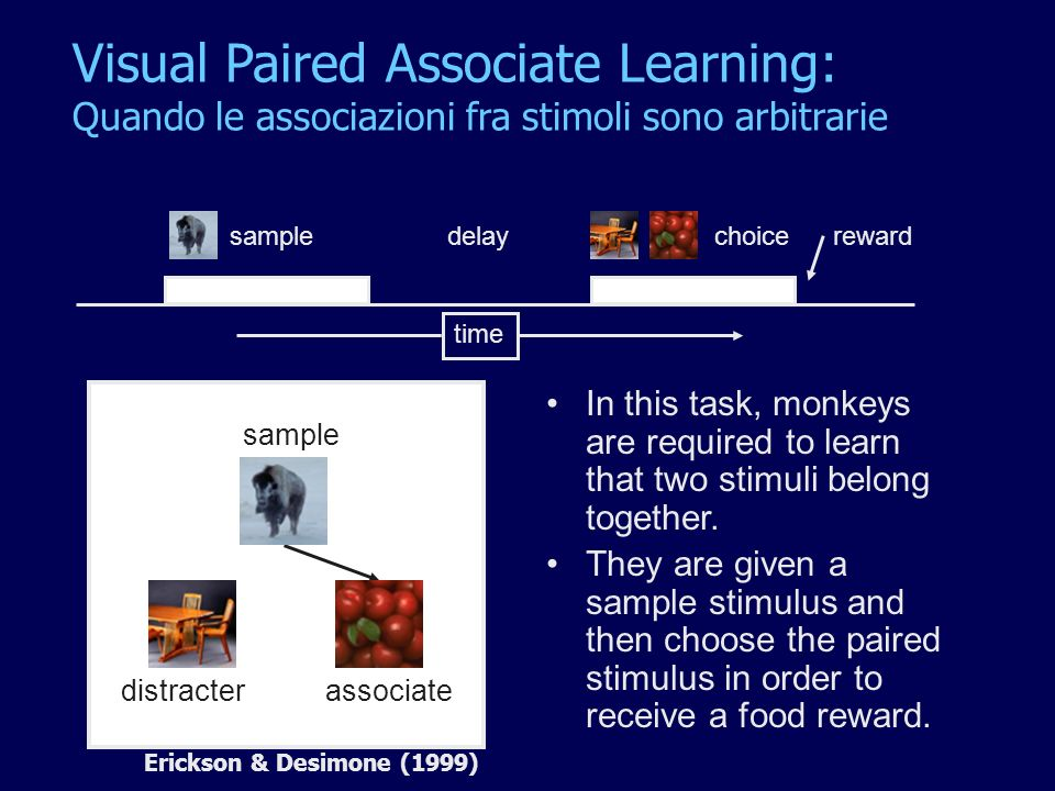 In this task, monkeys are required to learn that two stimuli belong together. They are given a sample stimulus and then choose the paired stimulus in