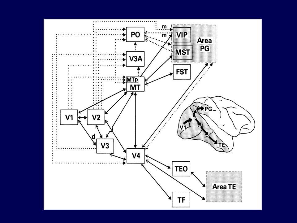 La capacità di identificare un OGGETTO migliora allaumentare del numero di esposizioni Le risposte a stimoli già incontrati sono più veloci e più accurate rispetto a quelle per stimoli nuovi Questa FACILITAZIONE è detta PRIMING percettivo Il priming è reso possibile da meccanismi di memoria (inconsapevoli) in grado di tenere traccia delle esperienze percettive passate Gli effetti di priming sono durevoli Il priming avviene anche per stimoli subliminali 1/AScoprire le regolarità: Priming percettivo