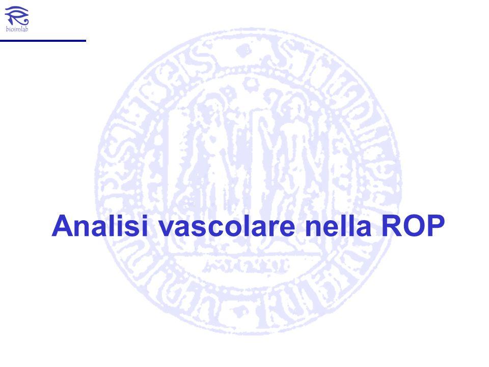 18.6 Stima della tortuosità nella ROP (Image courtesy of Prof.
