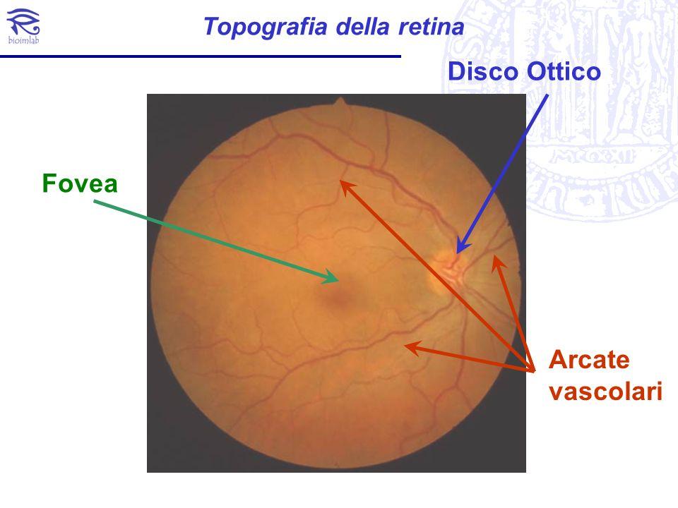 Topografia della retina Disco Ottico Fovea Arcate vascolari