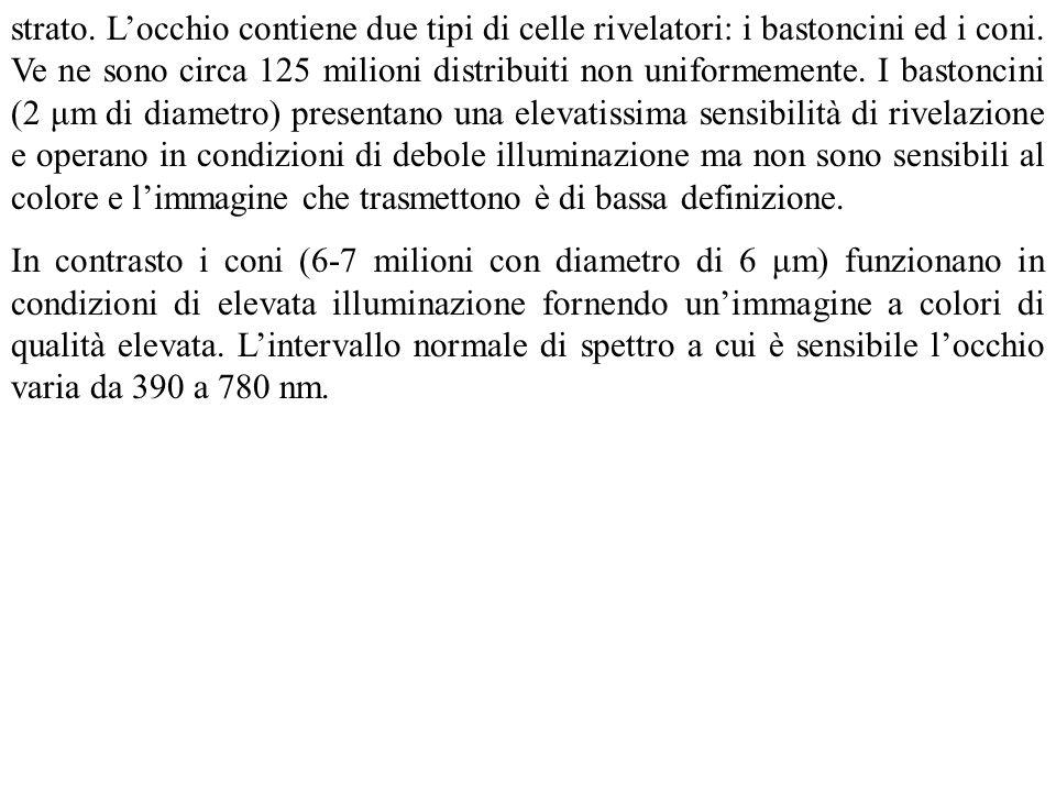 strato. Locchio contiene due tipi di celle rivelatori: i bastoncini ed i coni. Ve ne sono circa 125 milioni distribuiti non uniformemente. I bastoncin