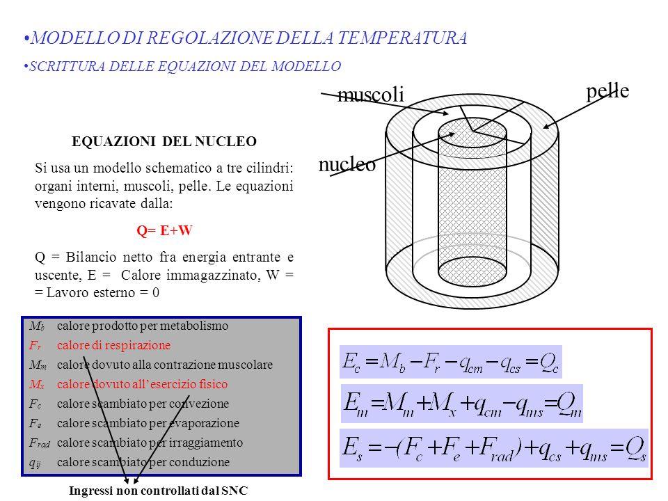 MODELLO DI REGOLAZIONE DELLA TEMPERATURA SCRITTURA DELLE EQUAZIONI DEL MODELLO EQUAZIONI DEL NUCLEO Si usa un modello schematico a tre cilindri: organ